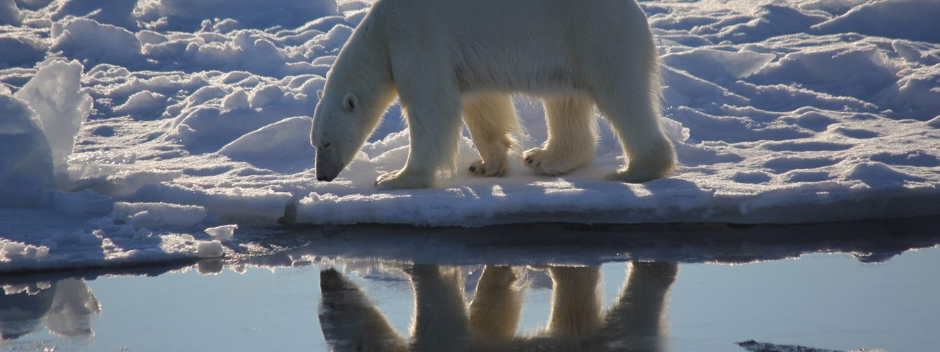 Bear reflection by Dr Emily Venables, Arctic PRIZE