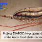 Arctic study to shed light on organisms key to the food chain