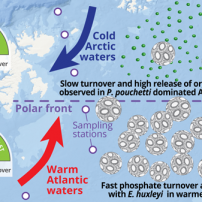 Arctic phytoplankton face competition in warming seas